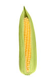 Fresh corn on a white background closeup Royalty Free Stock Photography