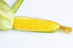 Fresh corn on white background. Fresh corn isolate on the white background Stock Images