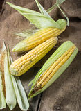 Fresh corn on wooden table. Fresh raw corn on wooden table Stock Photography