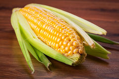 Fresh corncob Royalty Free Stock Photography