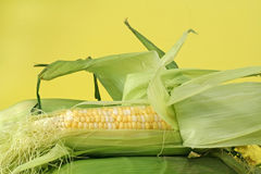 Fresh corncobs Royalty Free Stock Images