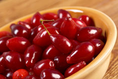 Fresh cornel berries Stock Images