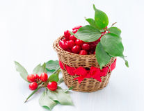 Fresh cornel berries Royalty Free Stock Image