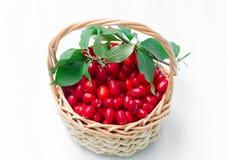 Fresh cornel berries Royalty Free Stock Image