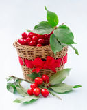 Fresh cornel berries Royalty Free Stock Images