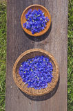 Fresh cornflower flowers in two wooden plate Stock Images