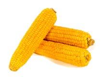 Fresh corns Stock Images