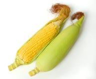 Fresh corns Stock Photo