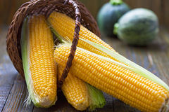 Fresh corns. In the basket Stock Images