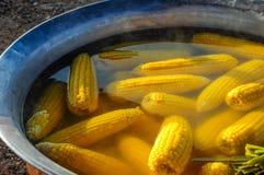Fresh corns - Boiled Royalty Free Stock Photo