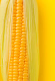 Fresh Corns Closeup Stock Image