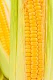 Fresh Corns Closeup Stock Photography