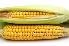 Fresh corns with green leaves Royalty Free Stock Photo