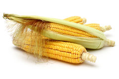 Fresh corns with green leaves Stock Photos