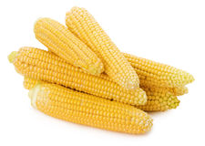 Fresh corns isolated on the white background Stock Image