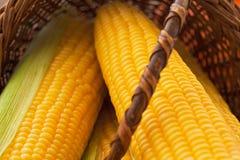 Fresh corns Stock Photography