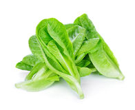Fresh Cos Lettuce Stock Photo