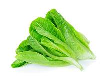 Fresh Cos Lettuce Stock Images