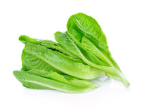Fresh Cos Lettuce Stock Image