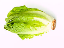 A fresh cos salad isolated on white background. A Closeup of fresh cos salad isolated on white background Royalty Free Stock Photos