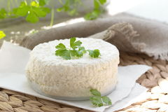 Fresh cottage cheese Stock Photography