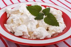 Fresh cottage cheese with mint leaves Royalty Free Stock Photo