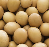Fresh country eggs Stock Photo