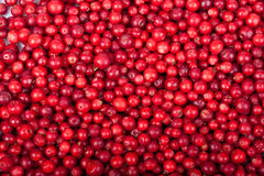 Fresh cowberry Stock Photos