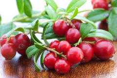 Fresh cowberry Royalty Free Stock Photos