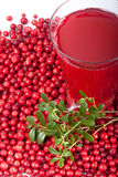 Fresh cowberry and berry juice glass Royalty Free Stock Photo