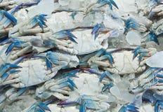 Fresh crab. S on ice background royalty free stock image