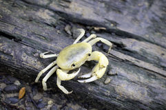 The fresh crab Stock Images