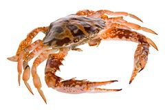 Fresh Crab Royalty Free Stock Images