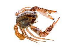 Fresh Crab royalty free stock photos