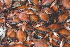 Fresh crab at American fish market Stock Images