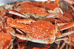 Fresh Crab background Royalty Free Stock Images