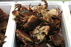 Fresh Crab Stock Photography