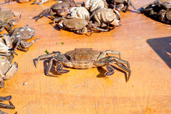 Fresh crab caught in the morning Royalty Free Stock Image