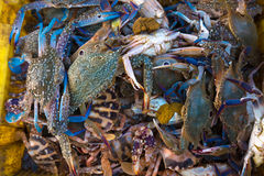 Fresh crab close up Stock Images