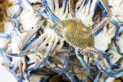 Fresh crab Royalty Free Stock Photo