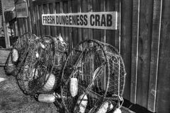 Fresh Crab advertisement. Fresh Dungeness Crab in Oysterville, WA Stock Photography