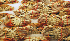 Fresh Crab on Ice Stock Images