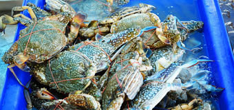 Fresh crab on ice box. Fresh seafood in market crab on ice box Royalty Free Stock Photos