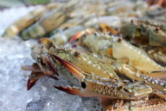 Fresh crab on ice. Fresh seafood in market  crab on ice Stock Photos