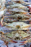 Fresh crab on ice. Fresh seafood in market  crab on ice Stock Photography