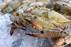 Fresh crab on ice. Fresh seafood in market  crab on ice Stock Images