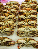 Fresh crab on ice Royalty Free Stock Image