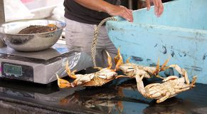 Fresh crab for sale Royalty Free Stock Photo