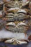 Fresh crab for sale. Fresh crabs for sale at Pike Place Market Royalty Free Stock Images