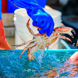 Fresh crab on sale by the fishing harbor in Half Moon Bay Califo Stock Photography